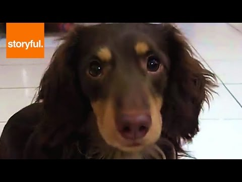 Smart Dog Rings Bell To Get Treats (Storyful, Dogs)