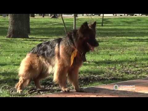 Лайфхак від кінолога поліції Загальний курс дресирування собак