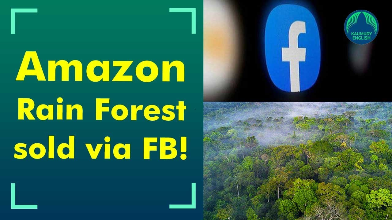 Amazon rainforest plots being illegally sold via Facebook Marketplace ads -  YouTube