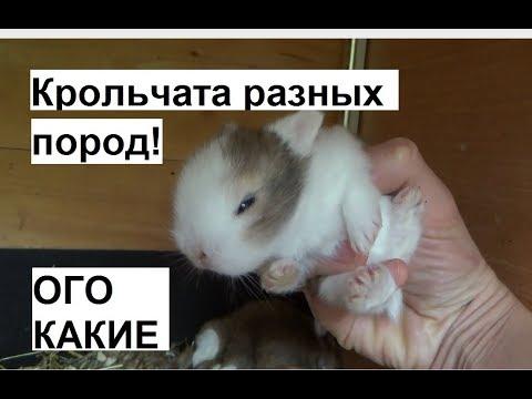 Осмотр кроличьих гнезд. Разные породы кроликов. Можно трогать руками крольчат.