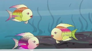 Three Little Fish   Nursery Rhyme For Children   California Kids