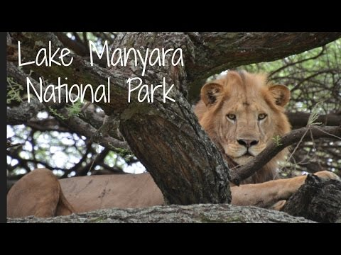 Lake Manyara National Park | Tanzania Safari Diary Day 7 | Ali Coultas