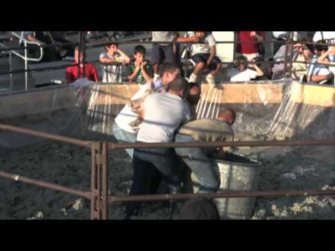 Midcontinent Communications Pig Wrestling 2012 At Central