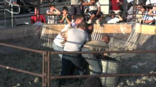Midcontinent Communications Pig Wrestling 2012 at Central States Fair in Rapid City, SD