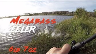 Megabass Eeler Florida 6 lb 7oz Bass