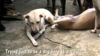 Do you know what happens to dogs caught up in the Dog Meat Trade?