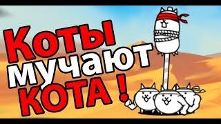 Коты мучают КОТА !