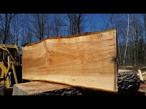 Milling a black maple tree with a woodmizer, hit a nail!!