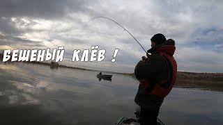 Судак на спиннинг Жёсткие тычки Рыбалка на Дону осенью