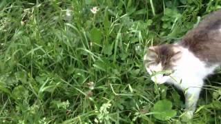 Шипящий кот 02