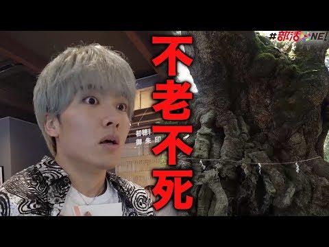永遠の寿命が手に入る樹齢二千年の巨木の前で日本最古の癒し歌を体感…最強パワースポット来宮神社で手に入る珍しい物とは…【オカルト部】