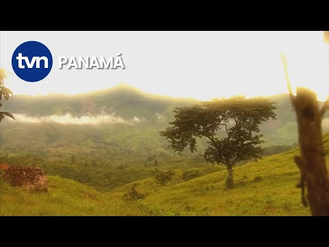 Fundación Carlos Arosemena Espino, Mercedes Espino,