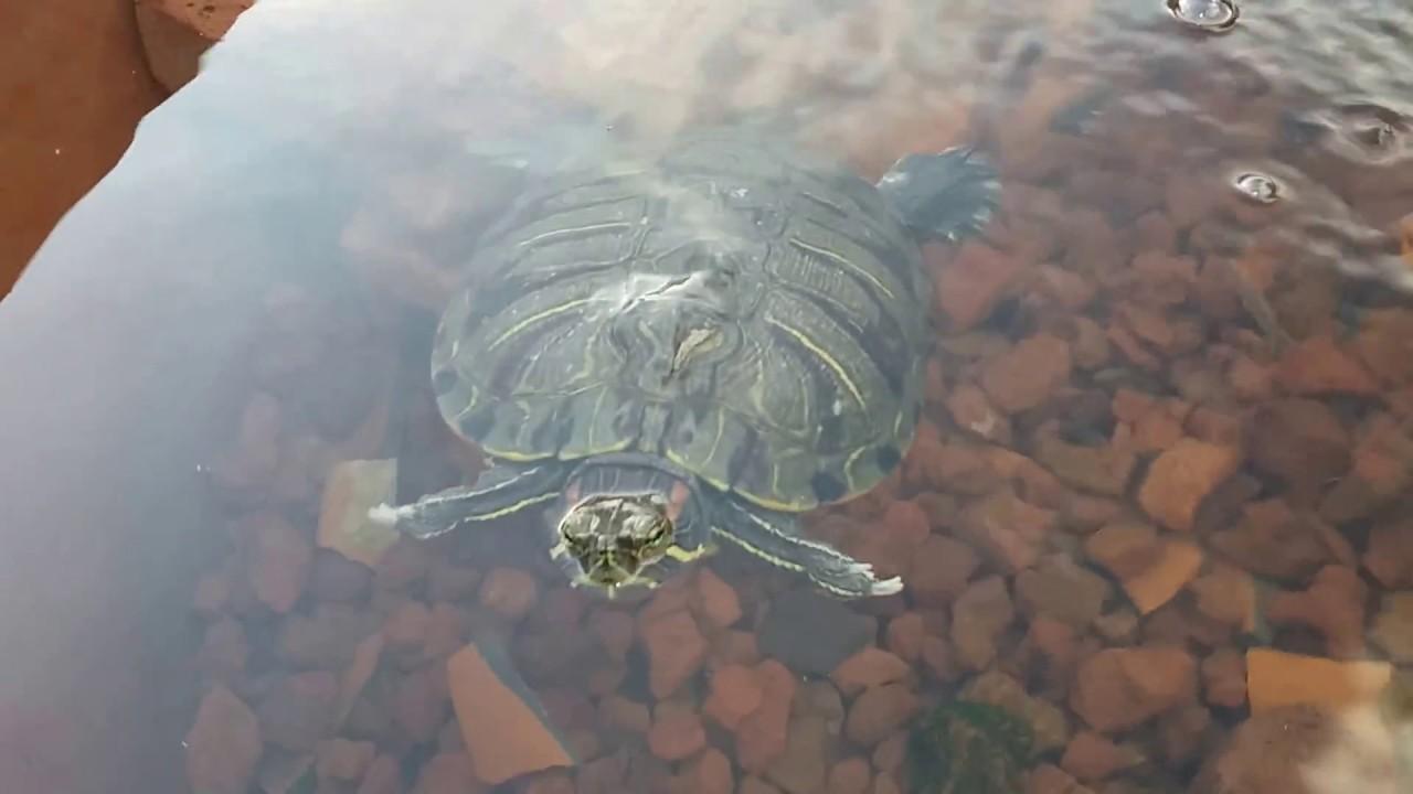 Estanque para tortugas con l mpara uv y carb n activado - Estanque para tortugas ...