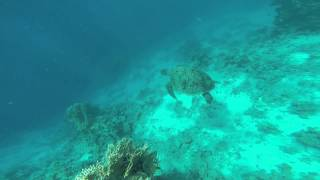 ЧЕРЕПАХА на острове Тиран, Шарм эль Шейх(Ребята, вот это красотище! Удивительное видео заснял наш турист на экскурсии