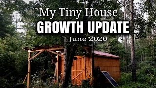 My Tiny House  Growth Update