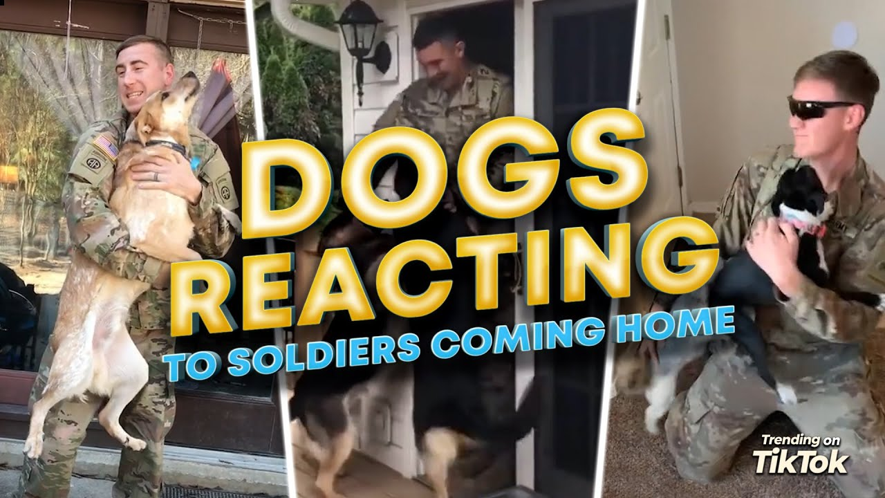 Dogs Reacting to Soldiers Coming Home. Truly Man's Best Friend?