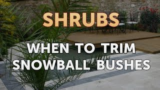 When to Trim Snowball Bushes