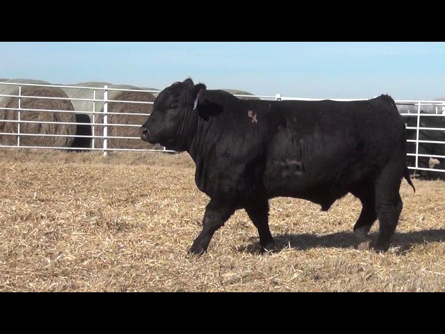 Express Ranches Lot 340