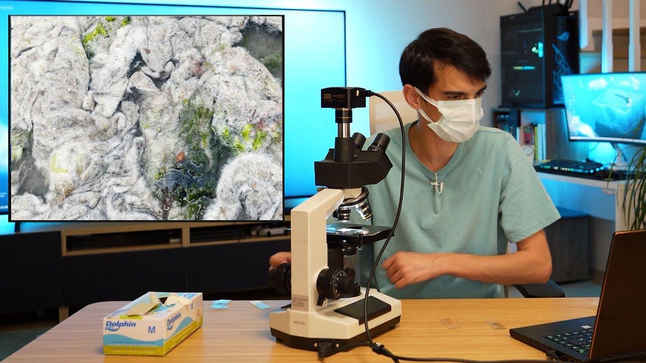 Mikroskopla DENİZ SALYASI İnceledim!