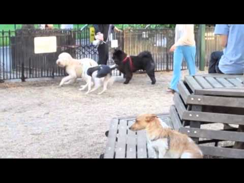 Dog Park Entryway Mobbing1 Slow Motion