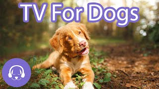 TV For Dogs  Relaxing Nature Walk | Video for Dogs to Watch 2021