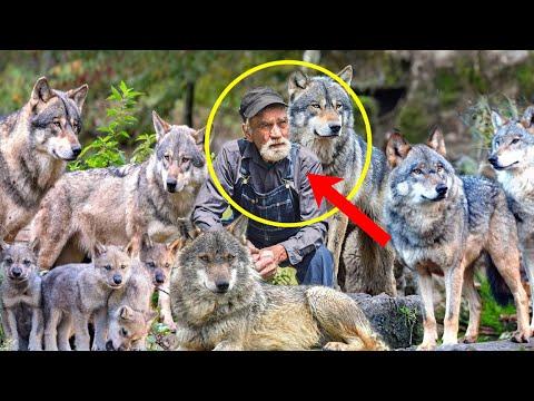 Спасая стаю волков от лесного пожара, егерь даже и представить не мог, как они его отблагодарят...