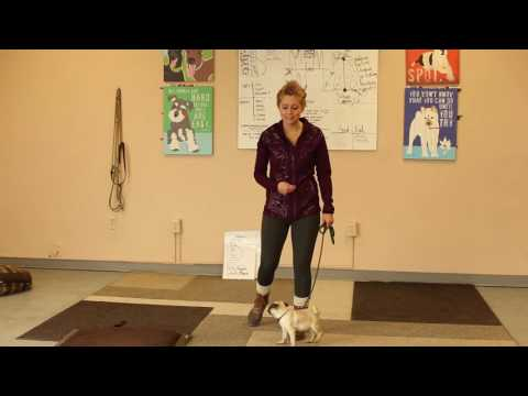 TYD60 Moment- How to Train a Dog Who Doesn't Want to Walk on a Leash