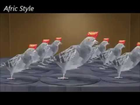 Poulets qui danse noel