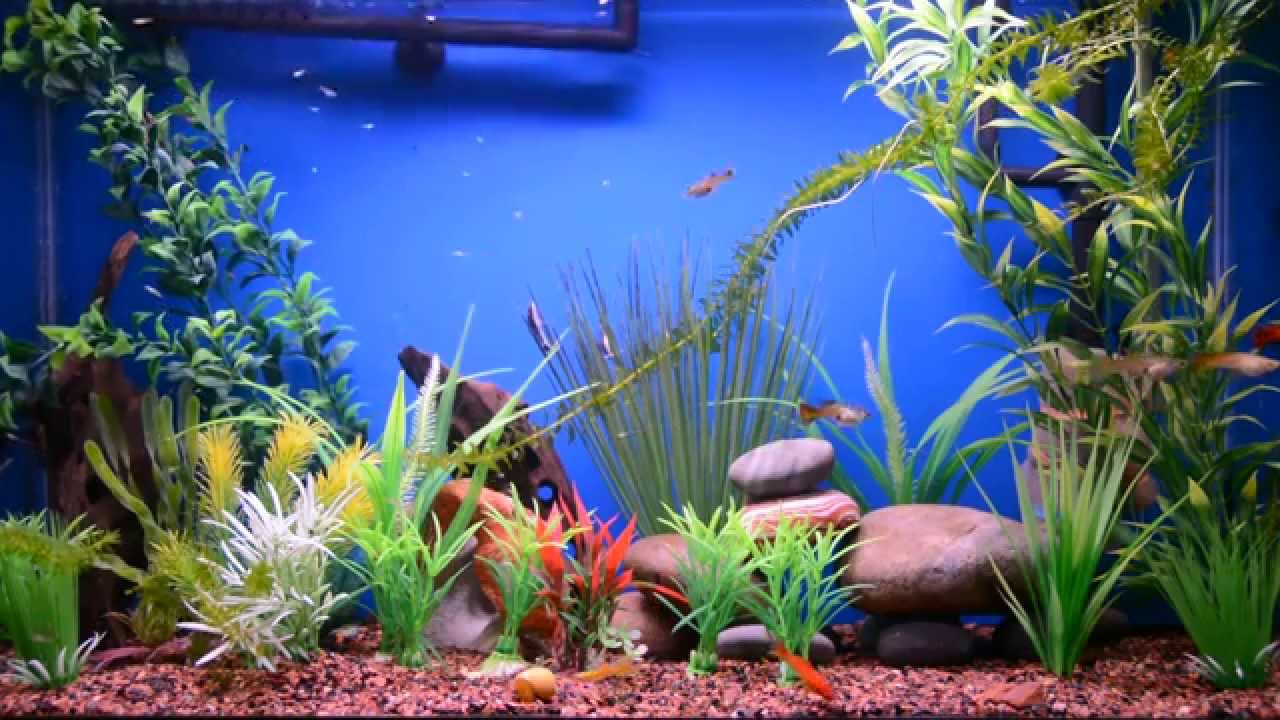how to setup new fish tank