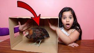 تحدي ايش الي في الصندوق !!! دجاجة في بيتنا ! what's in the box challenge