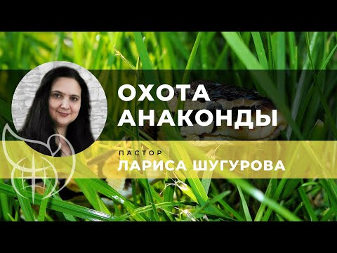 03 02 2019 Охота Анаконды