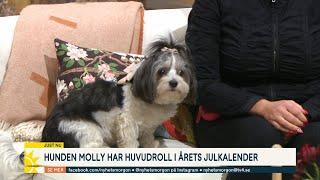"""Hunden Molly har huvudroll i årets julkalender: """"Har lärt henne att mima"""" - Nyhetsmorgon (TV4)"""