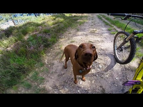 GoPro: Amber the Downhill Dog