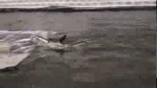 Głębinowy Viper fisch tańcuje na sumowym kiju