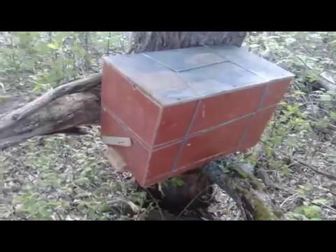 Древесные грибы и постановка ловушек