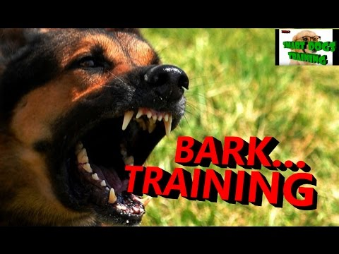 How to train your Dog to Bark and STOP BARKING training in hindi