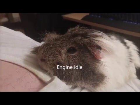 Guinea Pig Engine