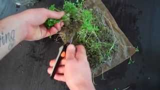 How to Grow Micro Greens Inexpensively at Home - Part 3