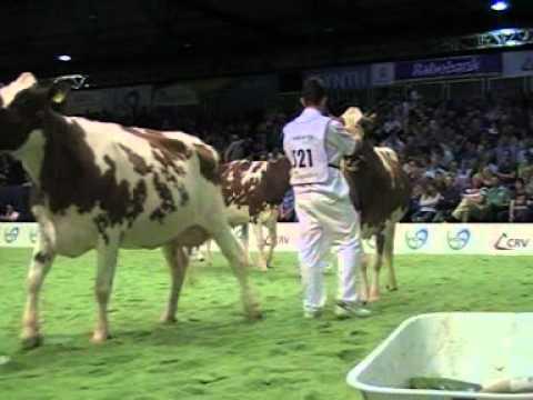 Holstein Master Sale Nr. 04
