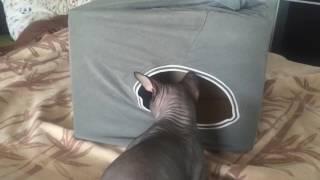 Домик для кота из коробки и футболки своими руками