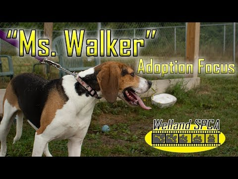 """Ms. Walker"" 