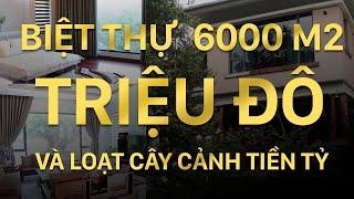 BIỆT THỰ 20 TỶ sân vườn 6000 m2 và hàng loạt Cây cảnh đắt tiền của Đại gia Thái Nguyên