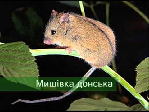 Тварини Червоної книги України