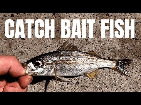 How To Catch BAIT FISH (Secret Rig)