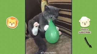 Funny Videos 😁 Funniest 😻 Cats and 🐶 Dogs   Funny Pet Animals Video Compilation #34