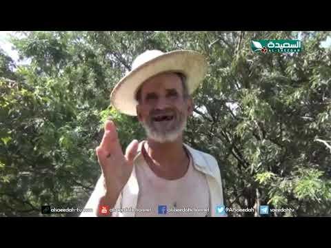 إهمال يطال أشجار التمر الهندي رغم اهميتها (11-10-2019)