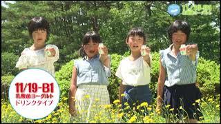 【東北協同乳業】11/19-B1乳酸菌ヨーグルトに ドリンクタイプが仲間入り。 東京大学薬学部の関水教授が発見した「11/19-B1乳酸菌」使用。 飲むヨー...