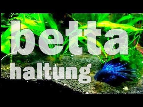 Mein Kampffisch-Cube Oder: Bettas Artgerecht Halten (Piscina #13)