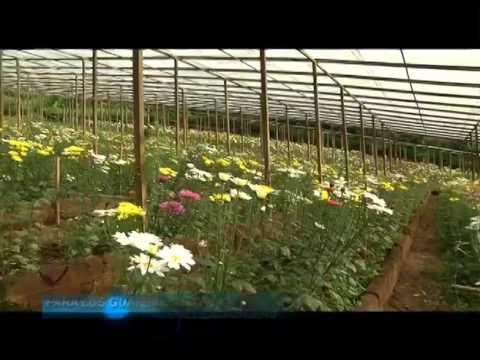 Nuestros Pueblos, Cultivo de Flores