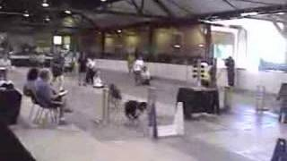 Flyball: Fbi In Ns! Riot, Max, Raven And Scully